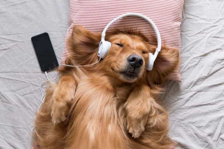 This dog is enjoying classical music in a funny picture