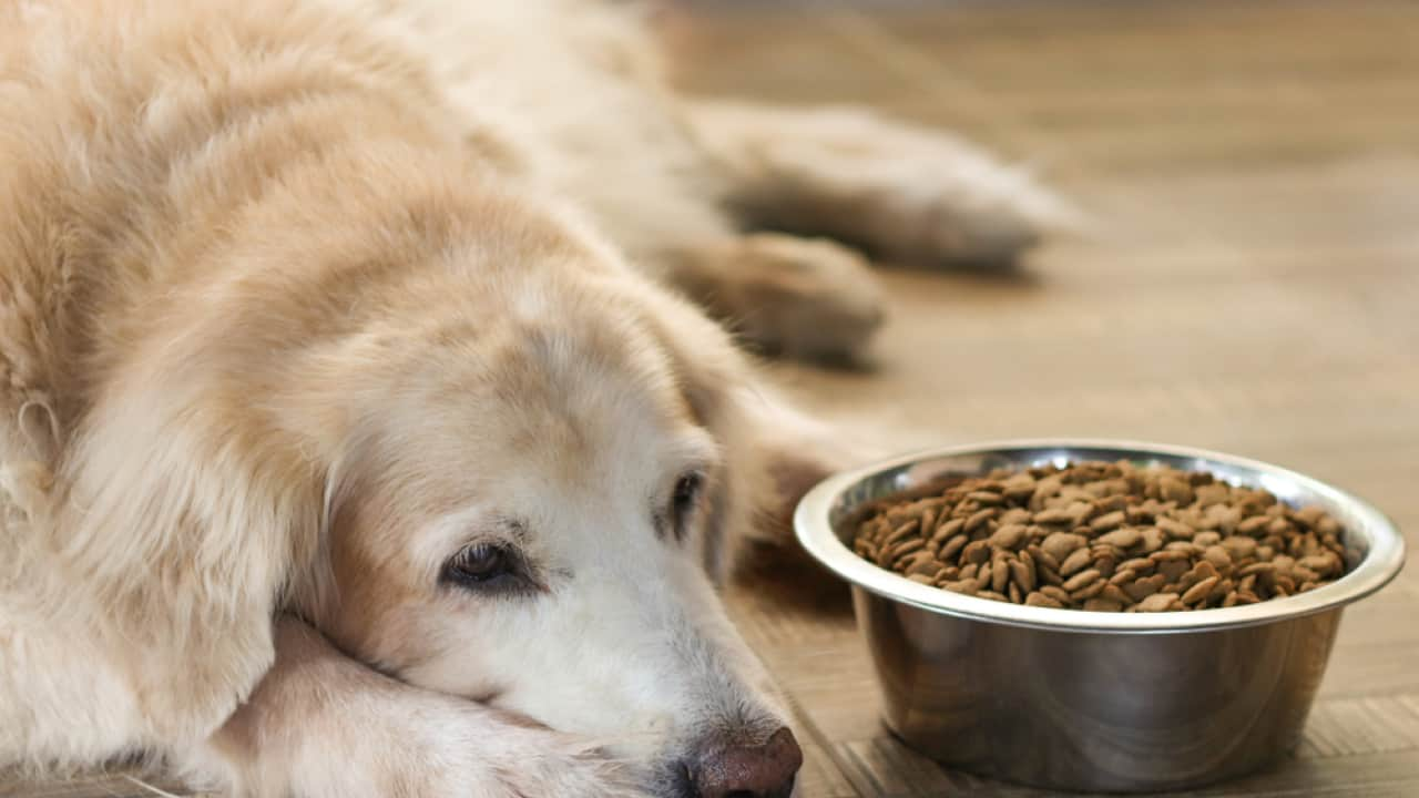 if your dog suffers from food allergies, there are foods that can help.