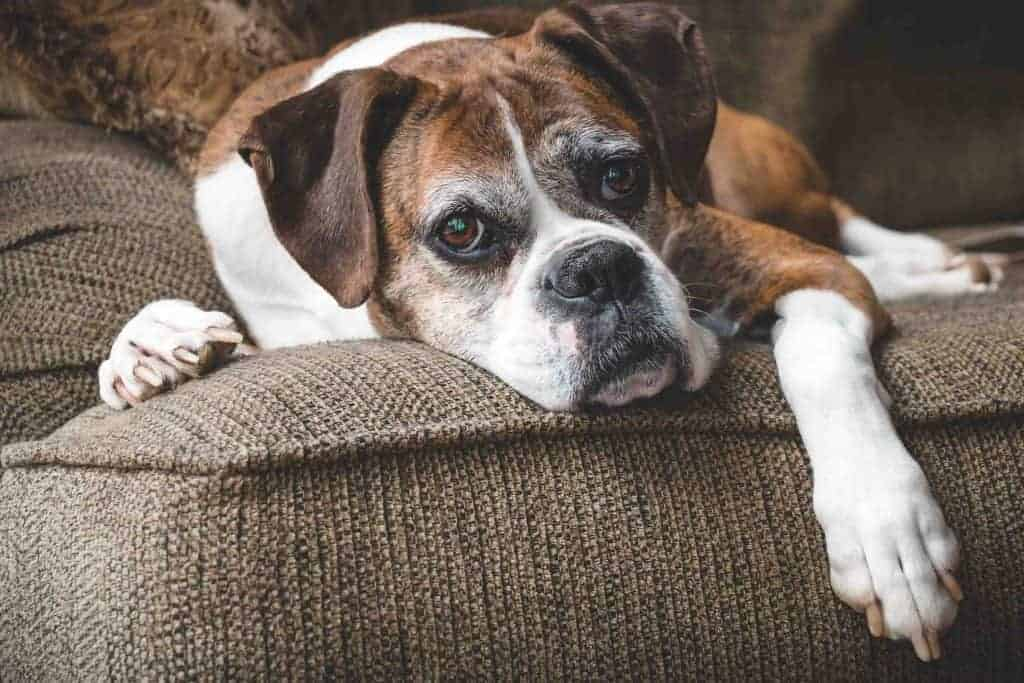Did you know that food can actually help older dogs that are going through joint pain? Here's how