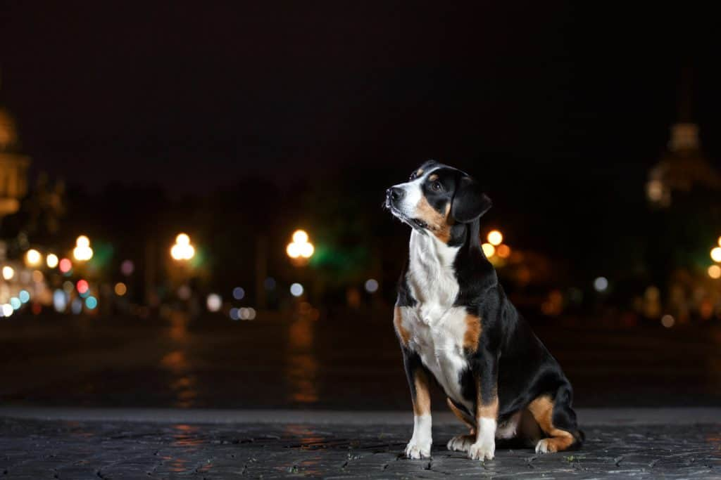 can dogs see in the dark? Or do their eyes only allow them to see during daylight hours?