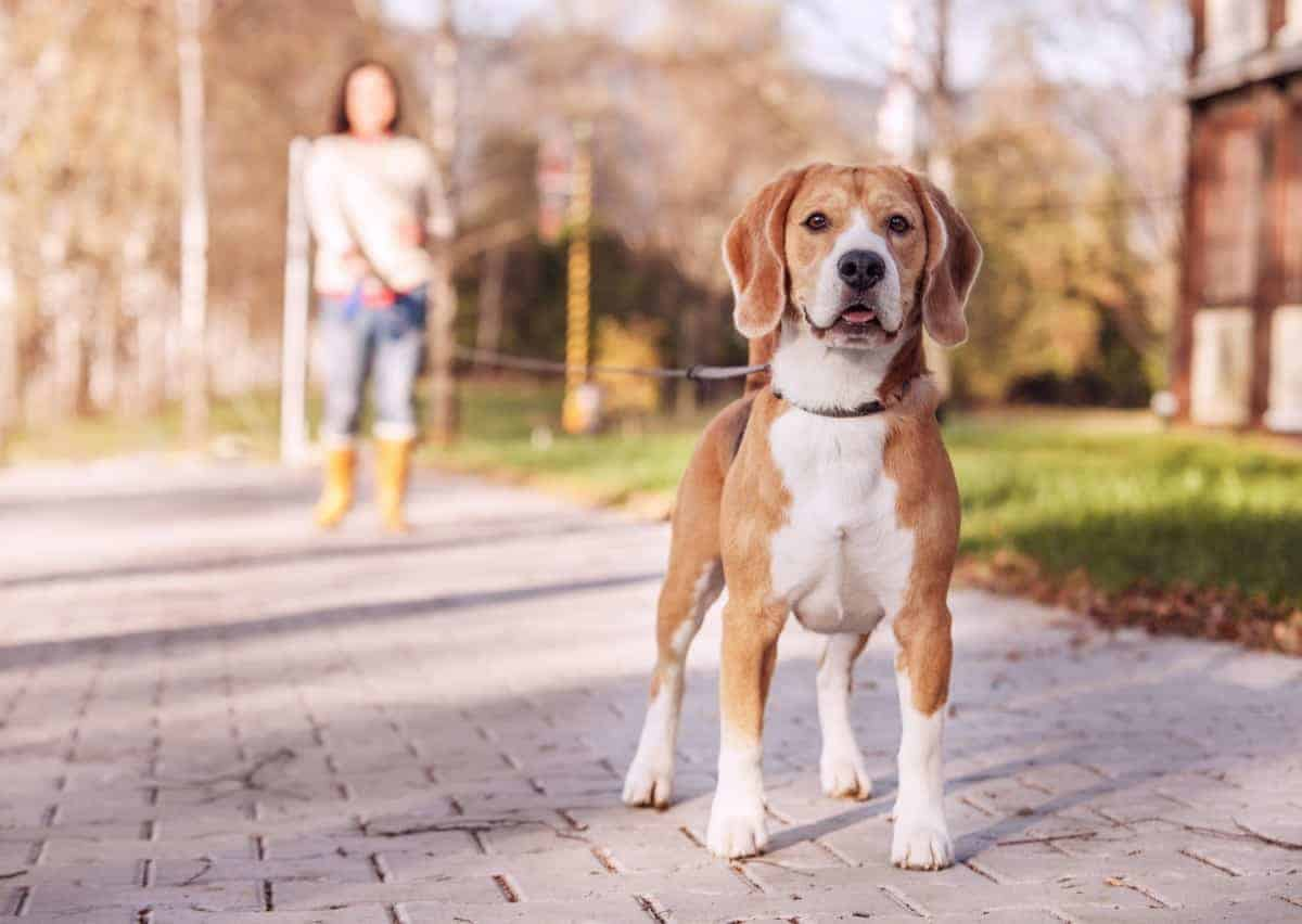 One of our favorite ways to trim dog nails is to simply take the dog on walks outside