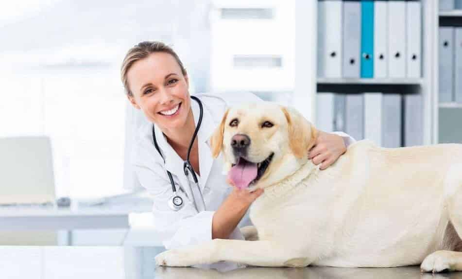If you think  your dog might have acid reflux, you must take them to the vet asap