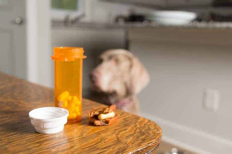 this dog is waiting to take medication for constipation