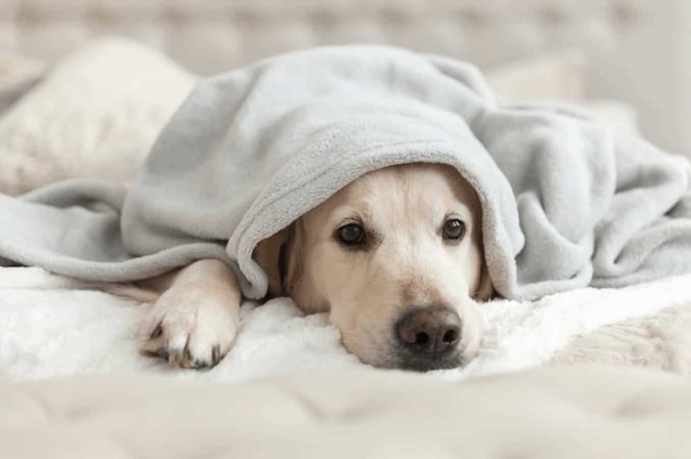 Yup, dogs actually do get sad and depressed. If you aren't sure how to tell if your dog isn't happy, here's a list of amazing tricks