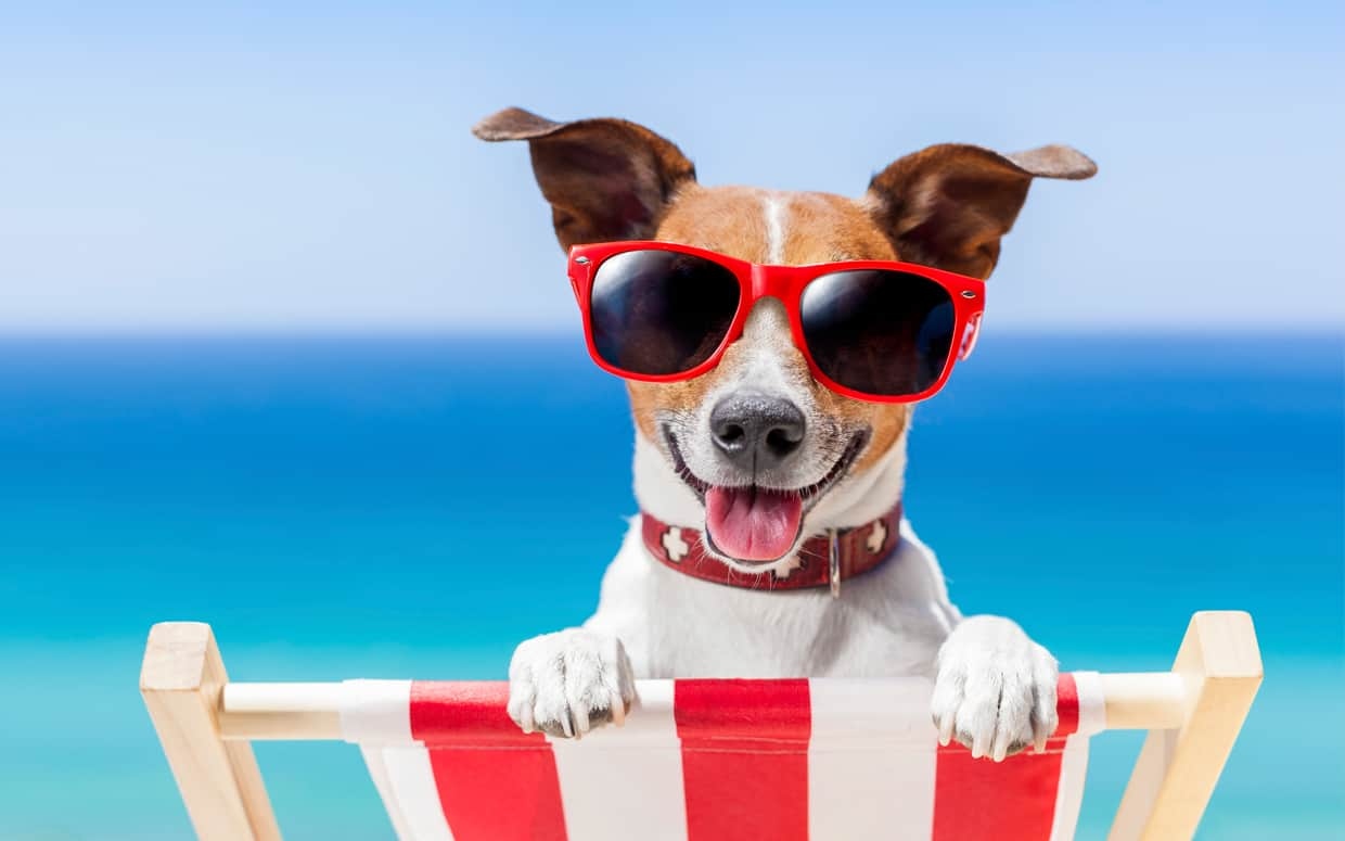 Have you ever wondered What Temperature is Too Hot For Dogs? Find out here