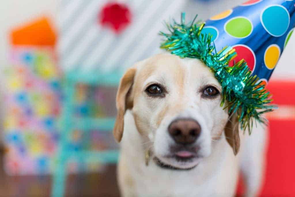 It can be hard to determine how old a stray dog is. Use these 7 methods to get a rough estimate