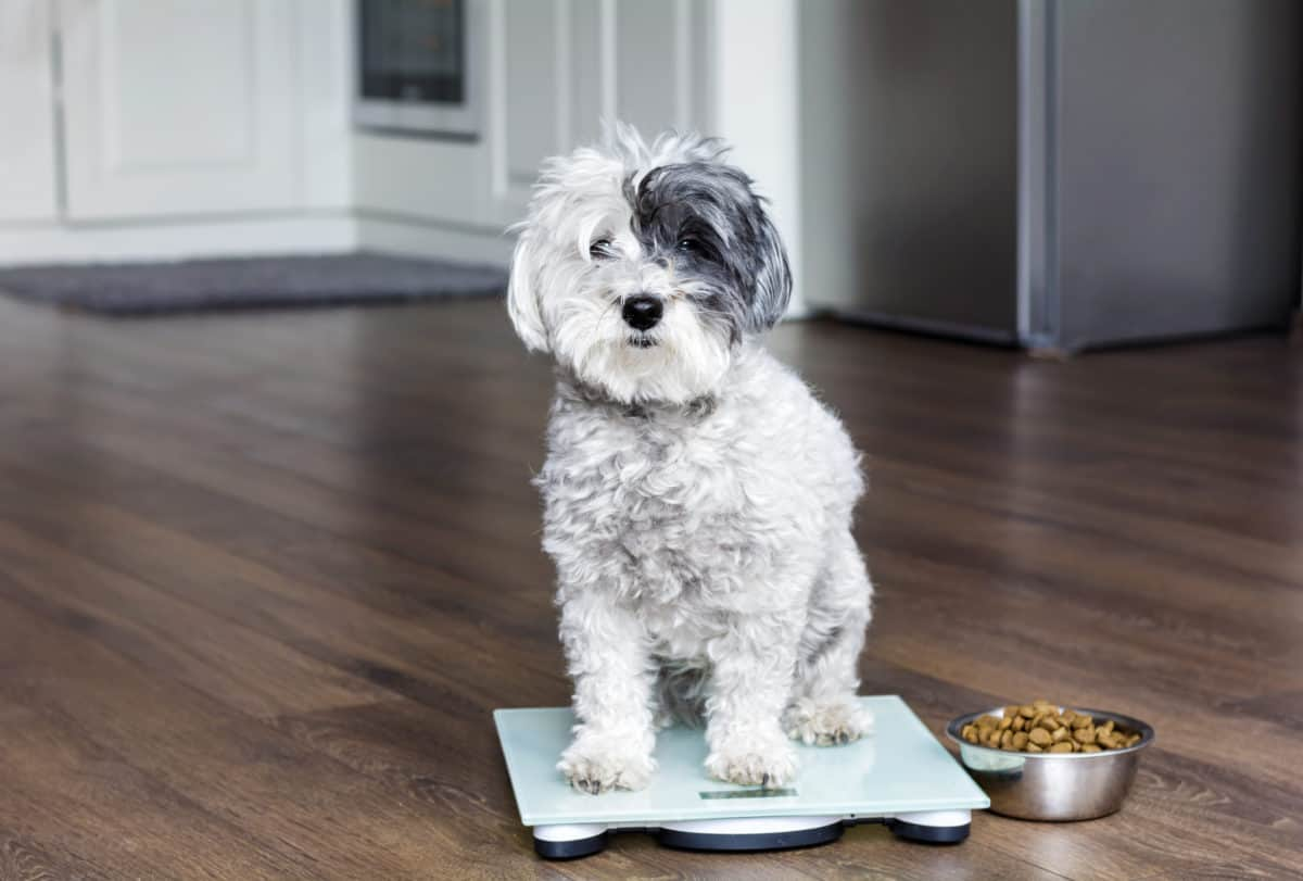 when adjusting calories for your dog, it's important to track their weight