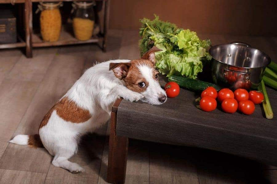 If you want to know the best way to get your dog to lose weight, this light diet is a great place to start