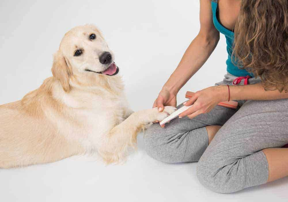 Manually filing dog nails is a great way to trim nails without cutters