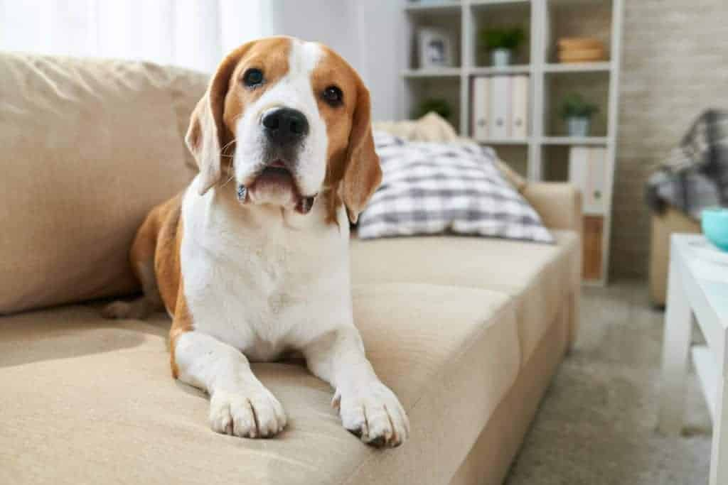 If you want to potty train your puppy but live in an apartment, you know the challenges ahead. The good news is there are simple methods to potty train a puppy in an apartment