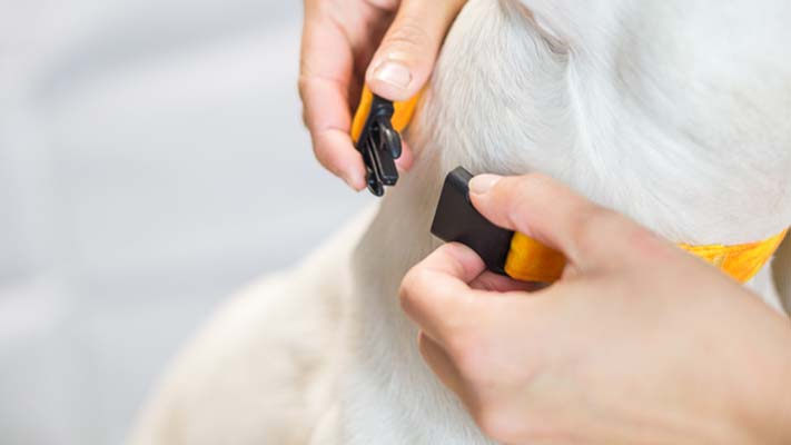 Using the two step method, you'll be able to get the right fit for your dogs collar