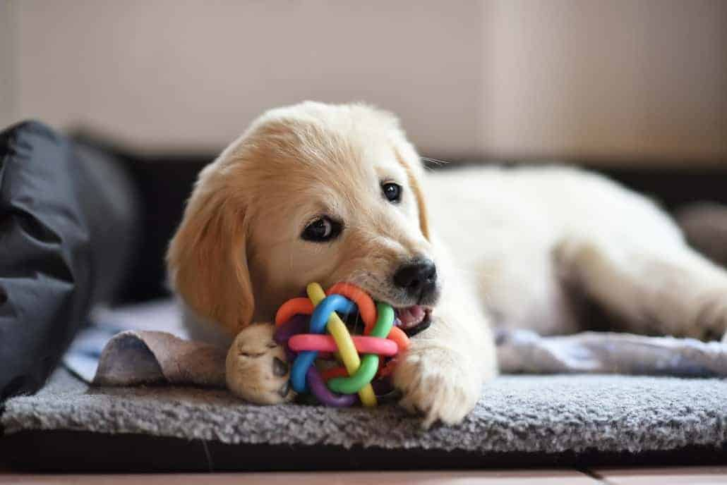 Dogs can see some color. This toy has all the colors a dog can see