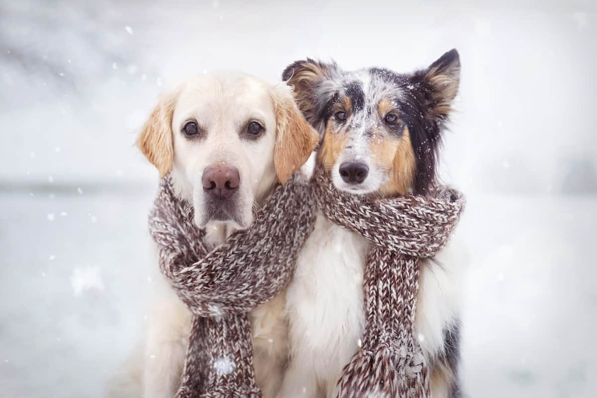 If it's cold outside and you leave your dog in the backyard, you may want to consider bringing them in