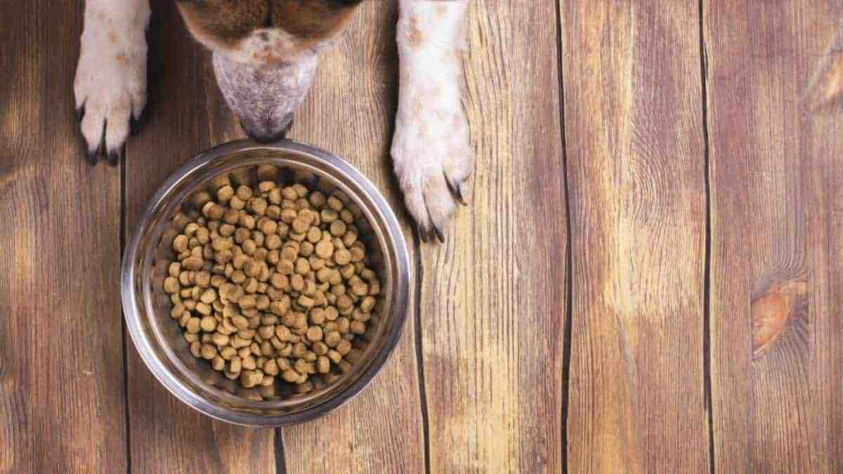 Not all dry dog food is bad for dogs, but there are some that should be avoided. 5 brands create the worst dry dog food for you dog.