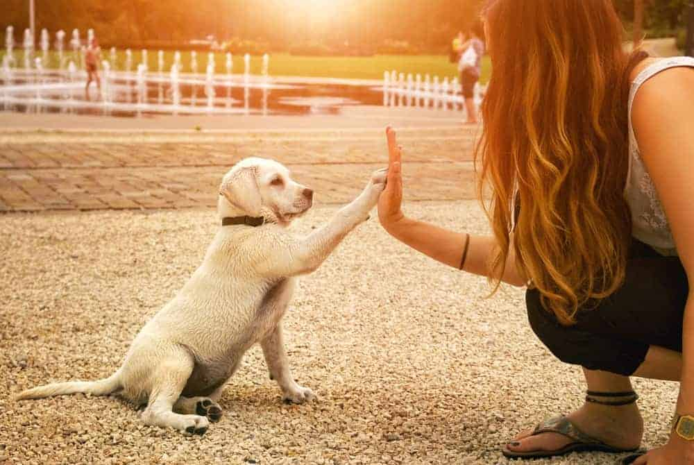 This dog is placing his paw on his owner, giving them a high five