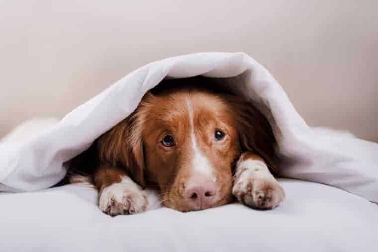 Worms are extremely common in dogs. Have you ever wondered how you can prevent it? You prevent it by first learning how they get worms in the first place