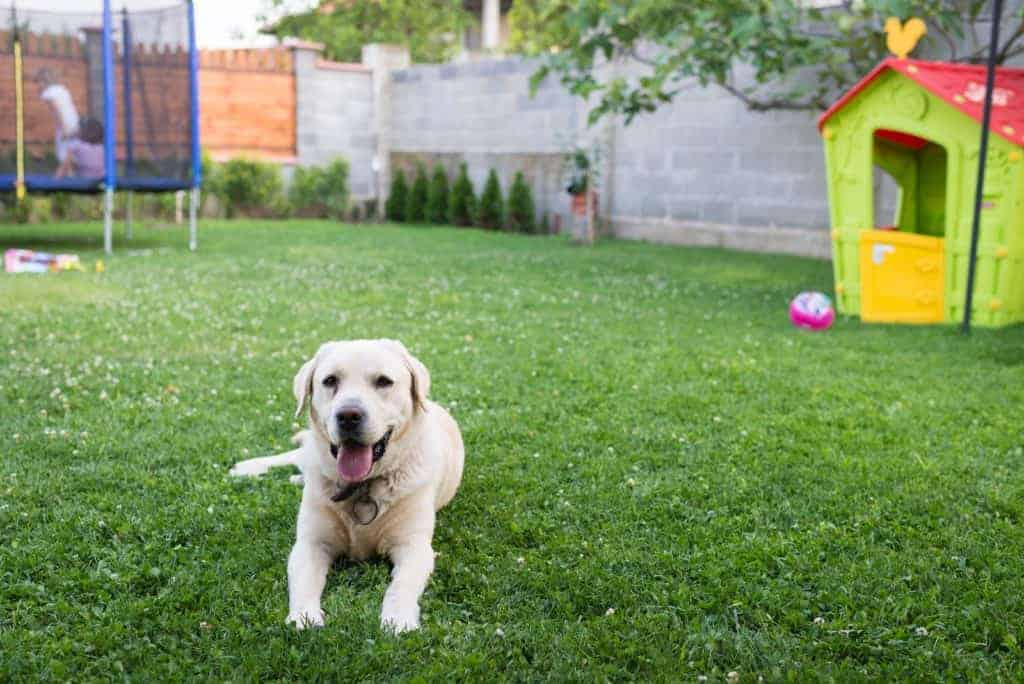 If you want to keep your dog in the yard without them running off, boundary training may be what you need