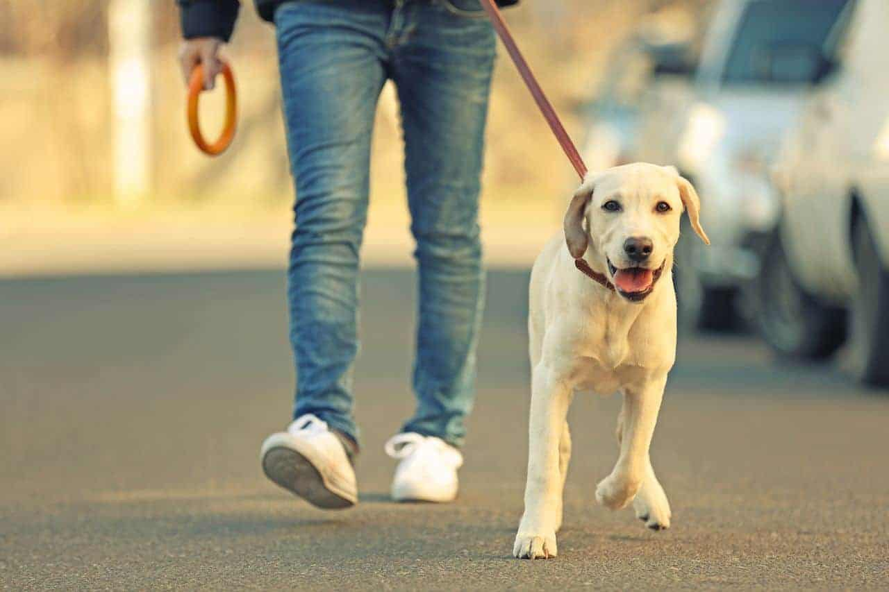 It's time to debunk all the myths out there about dog walking and when they should eat