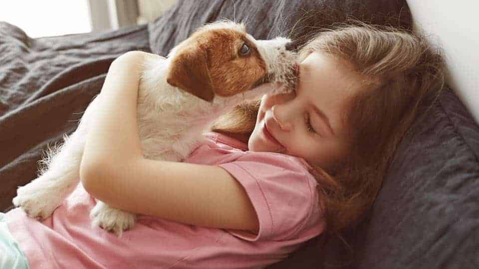 Does your dog put their paw on you when you pet them? Here are some reasons why