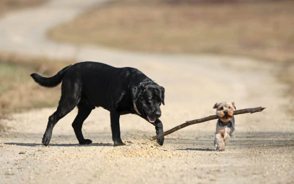 Big dog and small dog together. These are great methods to tell how big your dog will be