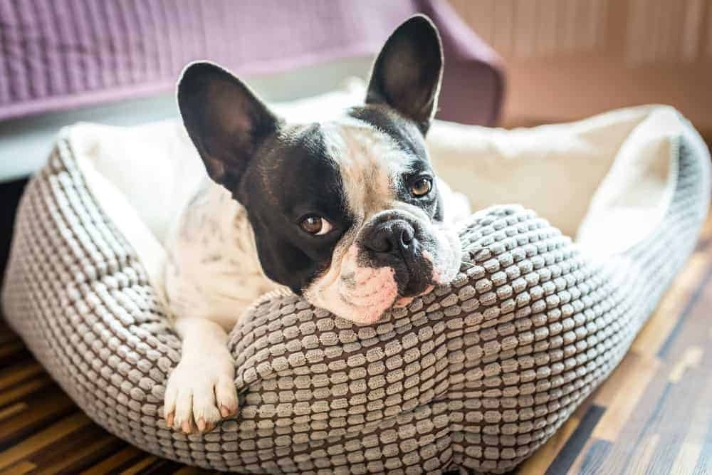 outdoor dog beds are perfect for your dog house