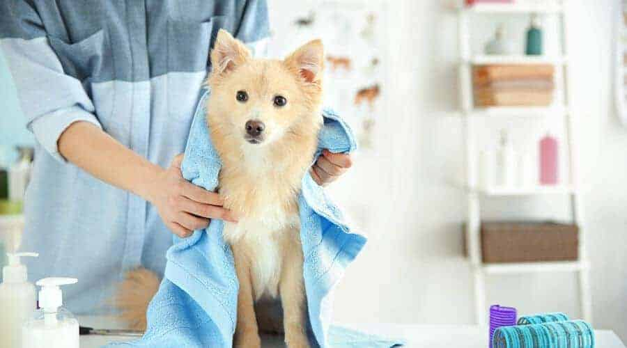 If you want to keep your dogs body temperature under control, make sure you properly groom them