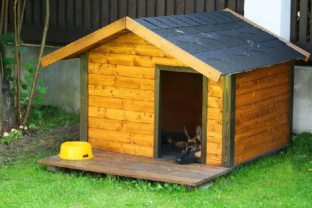 Keep the dog house warm by exposing it to the sun