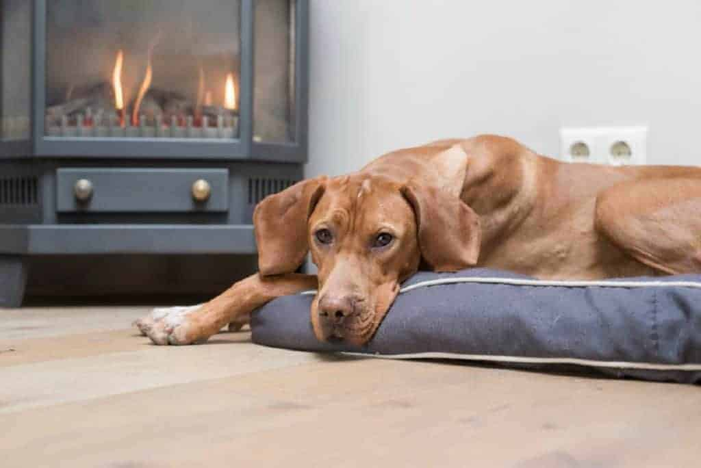 be careful with space heaters in dogs hosue