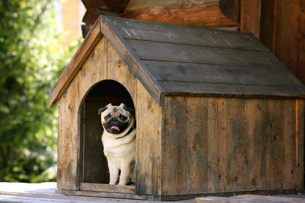 This dog house was insulated to keep dogs warm outside during cold weather