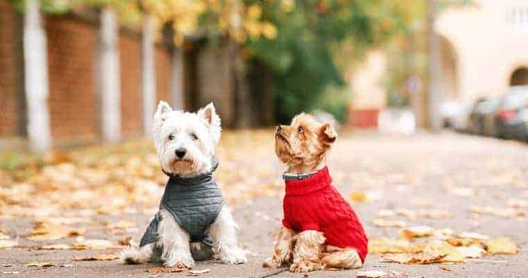 use clothing to keep your dog warm outside