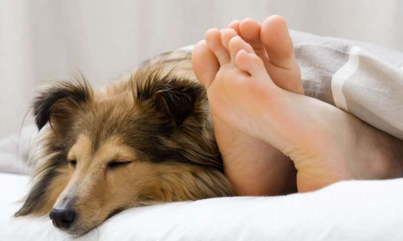 If you've ever wondered why your dog sleeps by your feet, you aren't alone. This dog is sleeping by their owners feet
