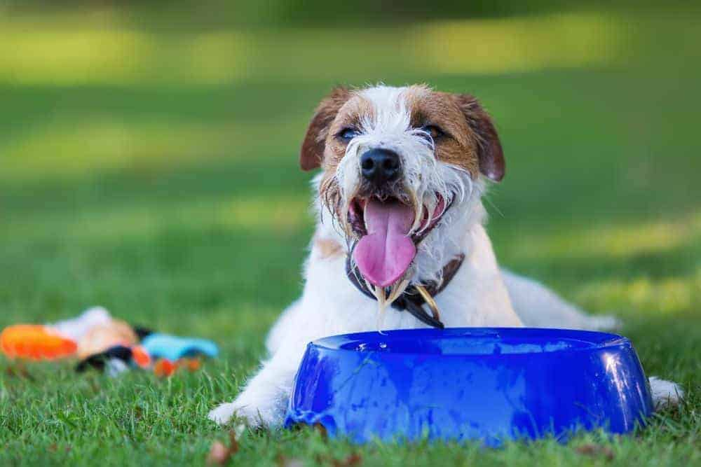 If you want your dog to drink more water, these 7 solutions should help