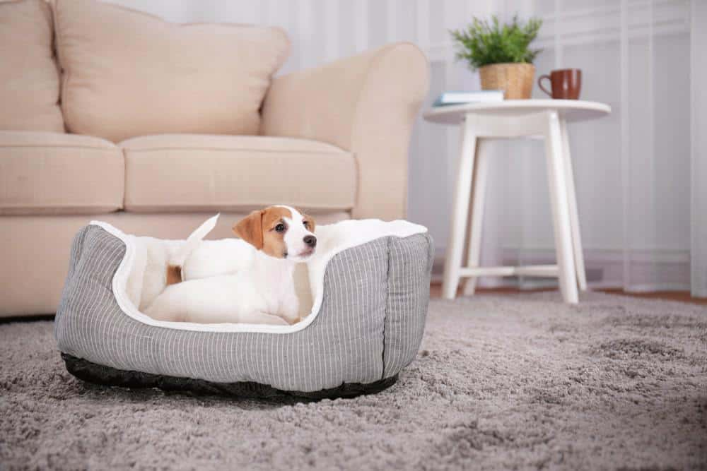 If your dog wont lay down to sleep, here are 5 great things to fix the problem