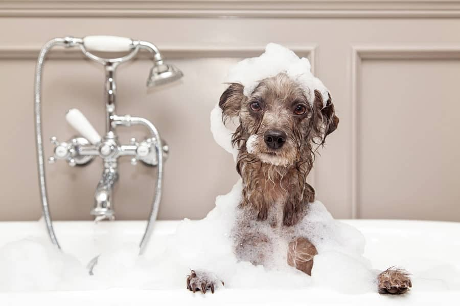 You may want to know if baby shampoo is ok for dogs, the answer is yes!