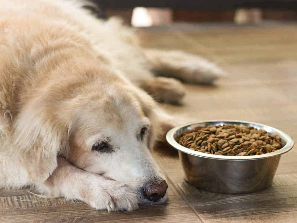 If you want to stimulate a dogs appetite, you can try changing their food