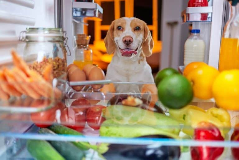 If you want to know how to stimulate a dogs appetite, here are eight possible ways. Take a look at each one and see if they'll work for your dog.