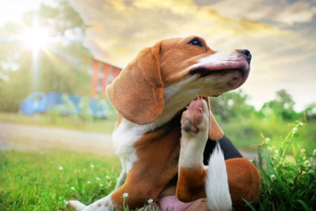 Did you know that zyrtec can help with dog skin allergies?