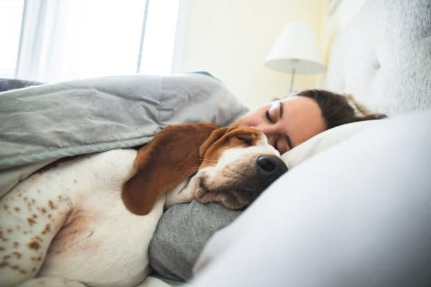 Somtimes dogs are cuddle bugs in the morning hours. Here are eight great reasons dogs like snuggling in the morning.