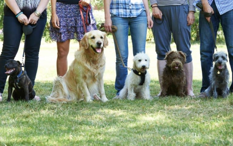 Have you ever wondered why your dog pees on other dogs? There are six main reasons