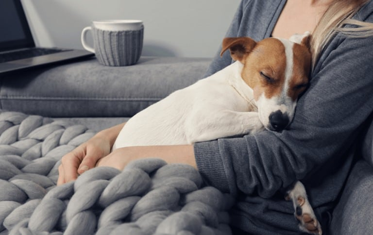 Your dog doesn't actually purr, but sometimes it sounds like it!