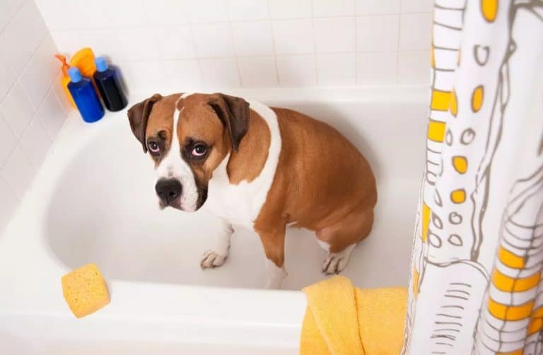 Does your dog smell like cheese? Here are 7 possible reasons