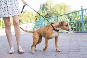 Gentle leaders are great leash training tools and not cruel. For something to be considered cruel, it must cause harm to the dog. Gentle leaders are perfectly safe and do not hurt the dog in any way.