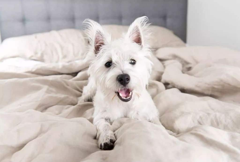 Do you need to keep your dog off the bed when you're not home? Here's how