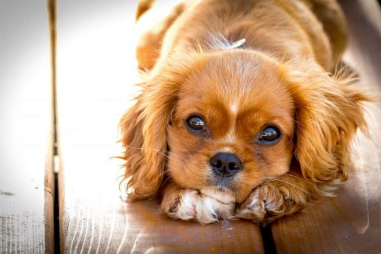 The ultimate guide to making dog hair soft
