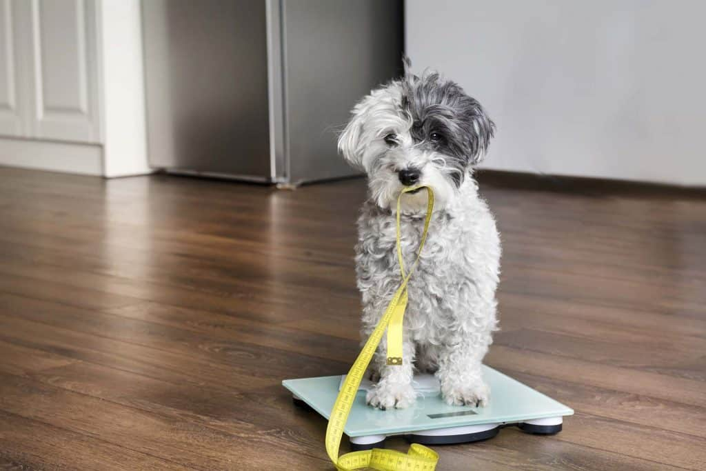 You've probably heard that you should measure your dog by the withers, but you might be wondering what and where the withers are. Here's a simple way to find the withers on your dog.