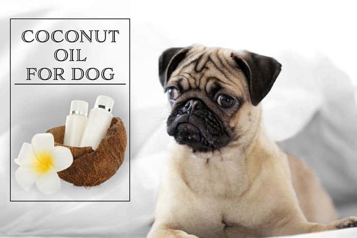 coconut oil is one of the best ways to get rid of dog mange