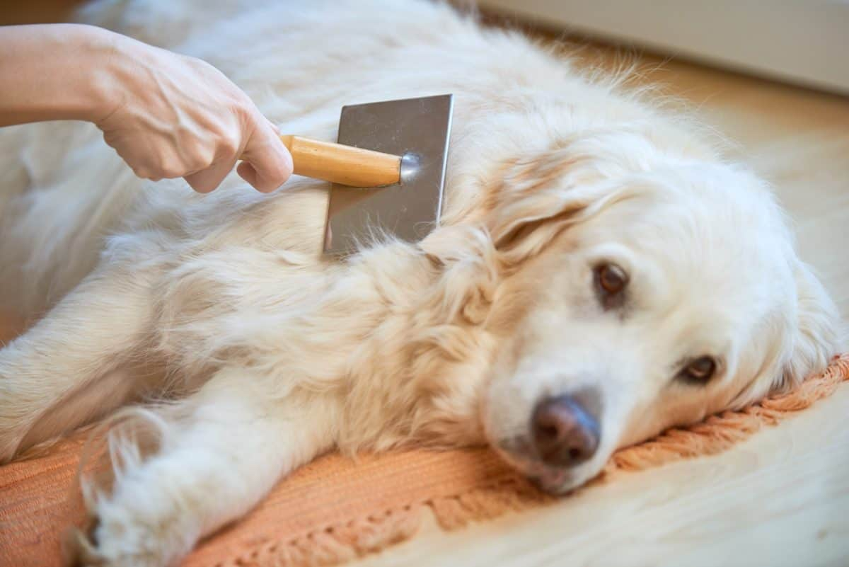 Matted dog hair can hurt some dogs depending on how tangled it gets