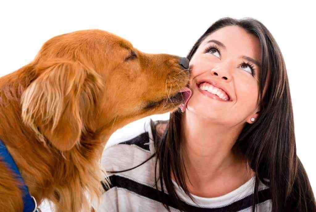 dog cleaning humans face