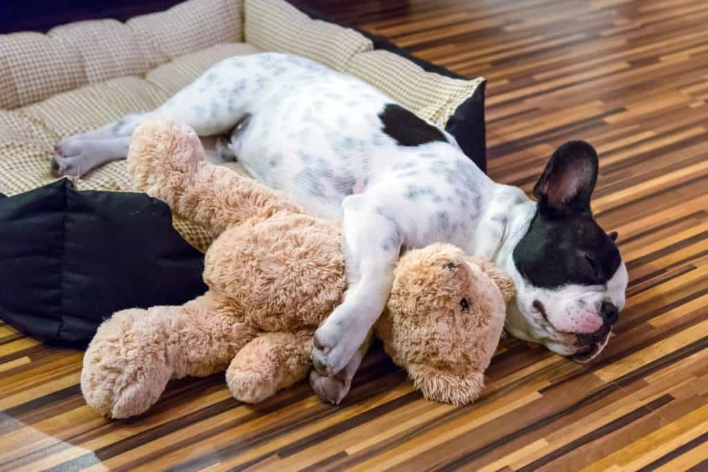 It's normal for dogs to make hiccup noises when sleeping, especially puppies.
