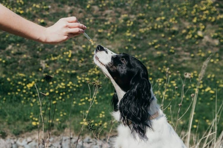 If your dog has an upset stomach, give these essential oils a try